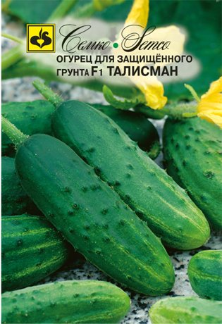 sorta-ogurtsov-dlya-teplitsy-foto-opisanie-harakteristiki-03