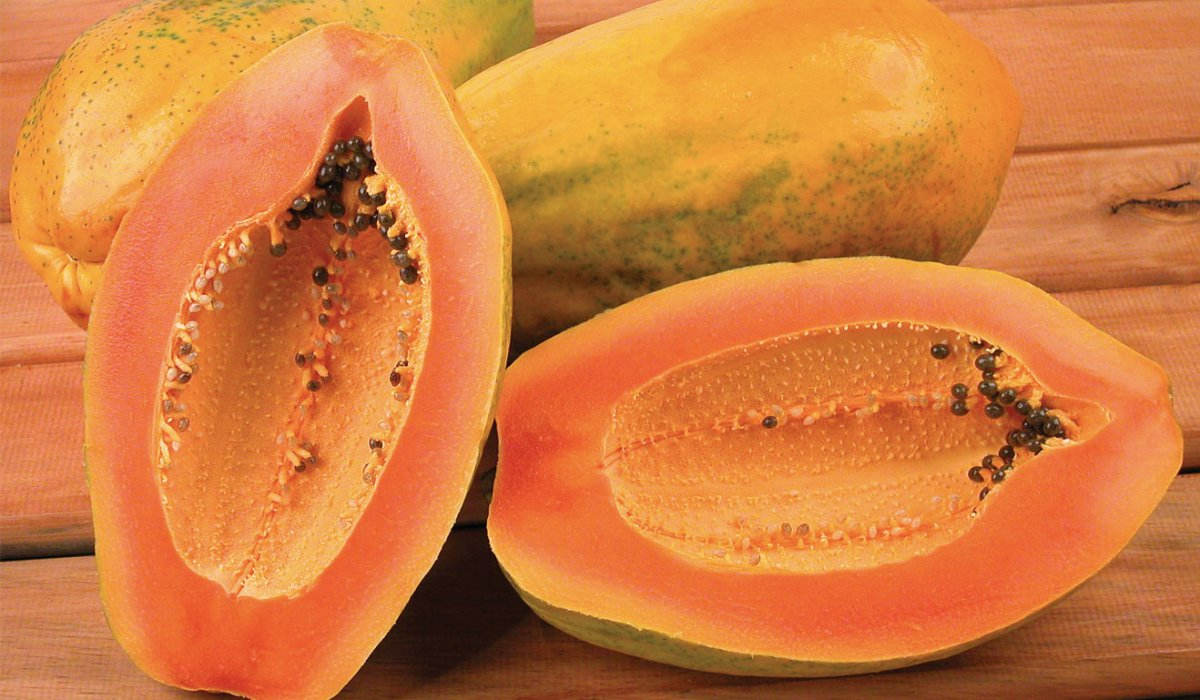 tropicheskie-plody-rastenij-kotorye-my-edim-foto-opisanie-6