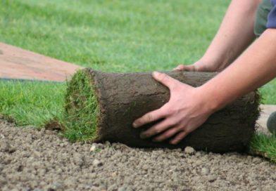 Рулонный газон: фото, как укладывать газон, советы по уходу