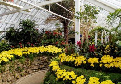 Зимний сад на участке: фото, видео, разновидности и особенности