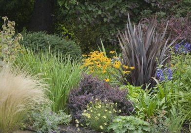 Площадь цветника: фото, как увеличить площадь цветников и рабаток