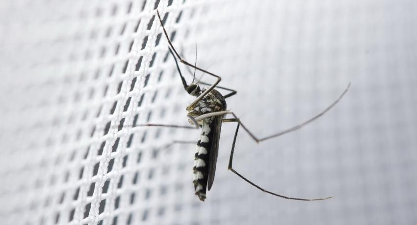moskitnye-setki-na-okna-foto-video-raznovidnosti-izdelij-1