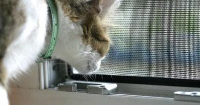 moskitnye-setki-na-okna-foto-video-raznovidnosti-izdelij