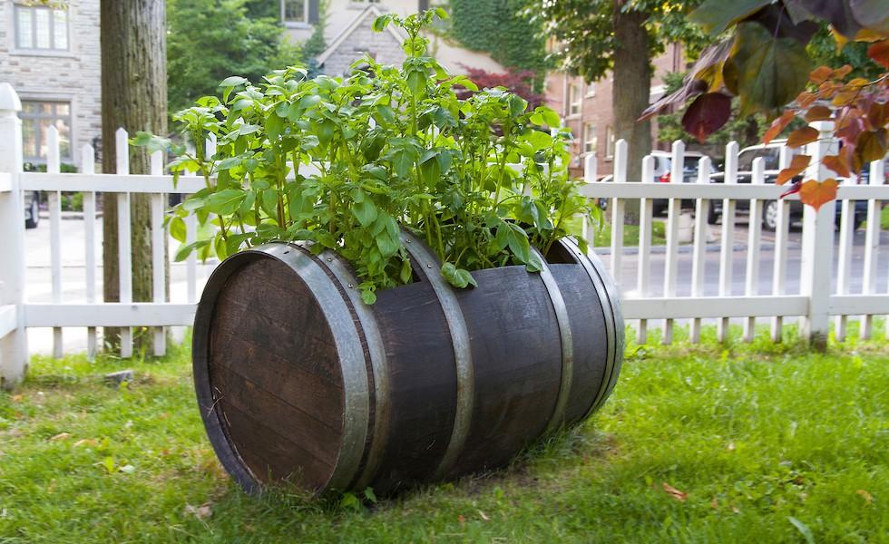 как в бочке посадить картошку