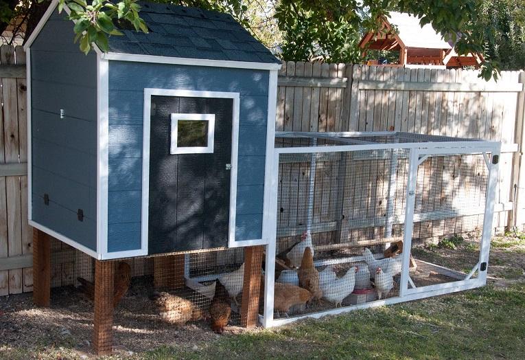 Как построить летний курятник на даче