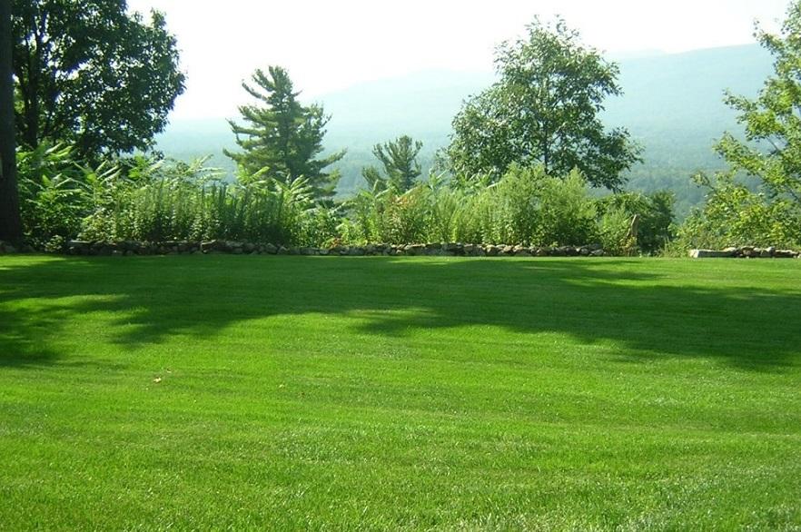 сеять газонную траву весной