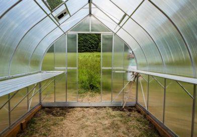 Теплица на даче: применение и виды теплиц для дачного участка, что можно выращивать