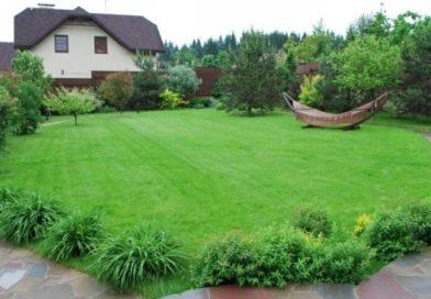 Правильный уход за газоном весной вокруг загородного дома