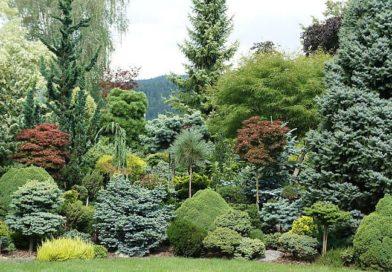 Как создать лесной стиль в ландшафтном дизайне сада, или загородного участка